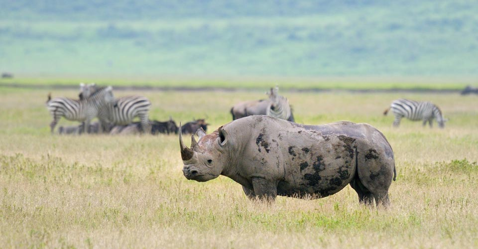 1 Day Excursions to Ngorongoro Crater, Tanzania, with Terre Authentic Tours & Safaris