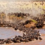 serengeti_safari_holidays