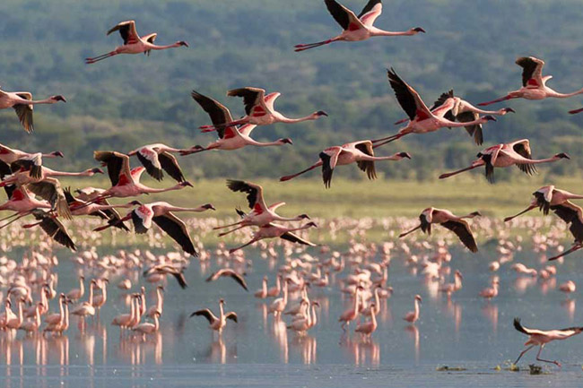 1 Day Excursions to Lake Manyara National Park, Tanzania, with Terre Authentic Tours & Safaris