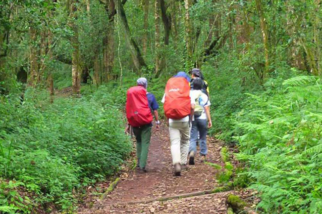 Day Tour Marangu trekking to Maundi crater, Tanzania, with Terre Authentic Tours & Safaris