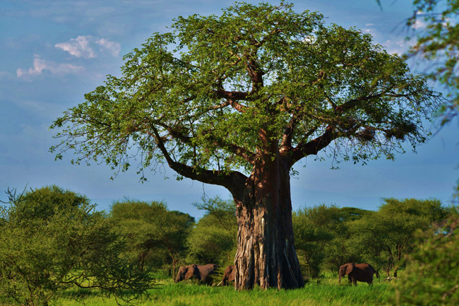 1 Day Tarangire National Park, Tanzania, with Terre Authentic Tours & Safaris