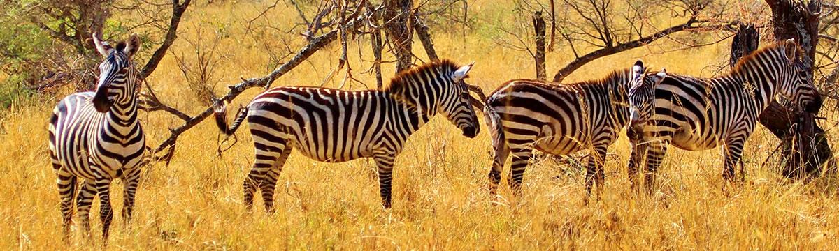 terre-authentic-safaris-tours-big-five-safaris-in-tanzania