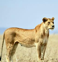 Wildlife Safari Tanzania