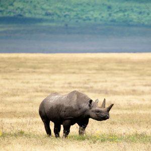 Ngorongoro_safari_creater